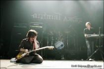 Фото Animal ДжаZ.